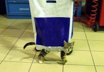 Funny picture of a cat stuck in a bag.