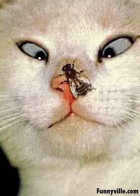 A bug on a cat's nose.