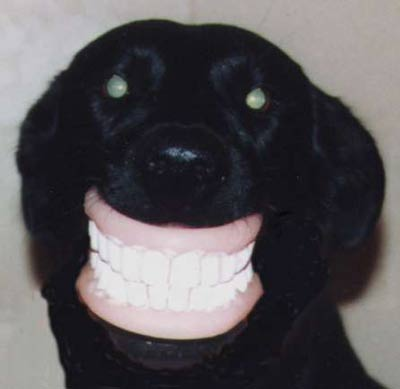 Dog wears dentures