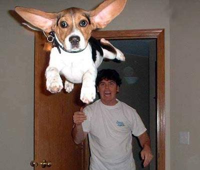 Dog flying away from owner