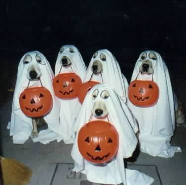 Dogs go out for halloween