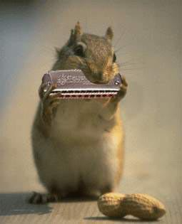 Chipmunk plays harmonica